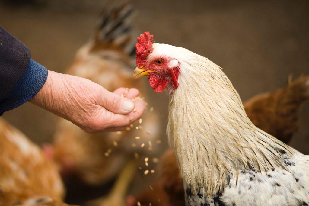 Da granja para a sua mesa.conheça nossa história